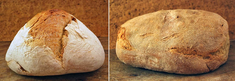 Civraxiu pane sardo di semola, due pagnotte