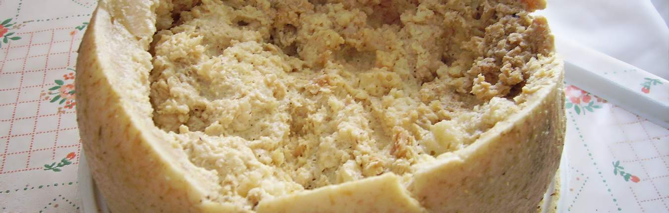 Formaggio con vermi sardo casu marzu aperto